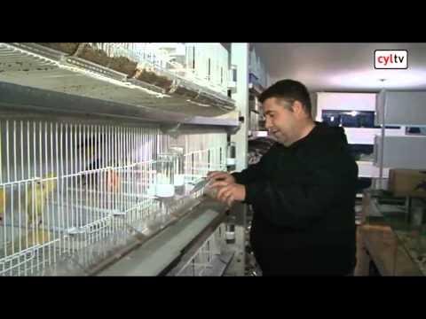 Unas Jaulas De Pajaros Muy Especiales Fabricadas En Hoyo De Pinares