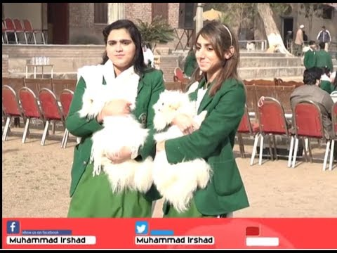 PET show Peshawar Edwards College 19 Jan, 2019|| Muhammad Irshad