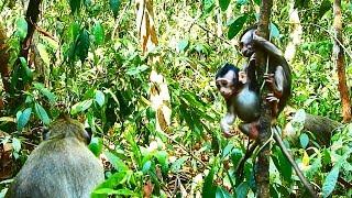 Hilarious little baby monkeys#281