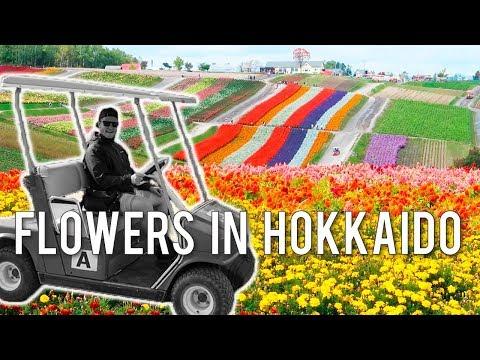 Flower Fields In Furano And Biei | Hokkaido Japan