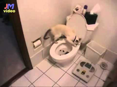 Katzenklo ?
