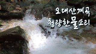 오대산 월정사 계곡의 맑은 물과 청량한 물소리 ㅣ 채널…