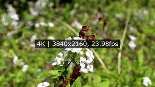 캐논 EOS RP | 동영상 화각 (4K UHD vs …
