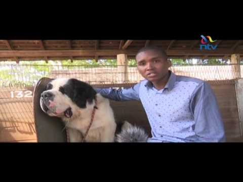 Dog training standards on the rise in Kenya