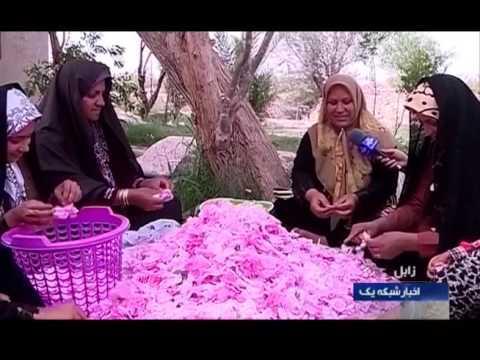 Iran Sistan & Baluchestan province, Rose harvest برداشت گل رز استان سيستان و بلوچستان ايران