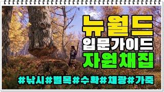 [뉴월드 입문가이드] 자원 채집 (낚시/벌목/채광/식물…