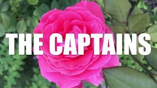 ザ・キャプテンズ - ハートにピットイン