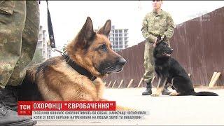 У кінологічному центрі під Києвом відбирають 50 собак для охорони Євробачення