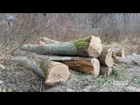 Поліція Волині: Поліція продовжує наводити лад з незаконними порубками лісу: цього разу -  на Ківерцівщині