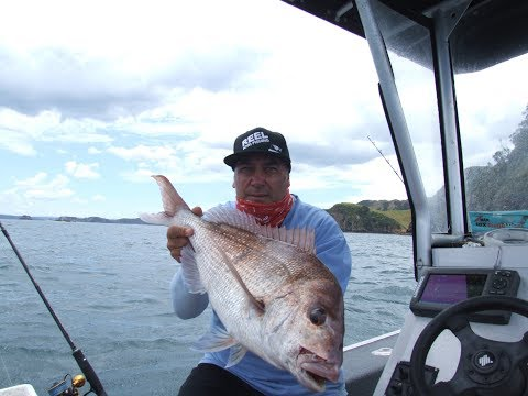 Fishing the bay and a dip in the water - Bay of islands