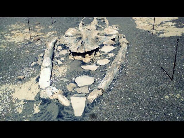 Sacaco: cmentarz wielorybów na pustyni