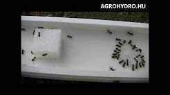 Gel cu atractant contra furnicilor