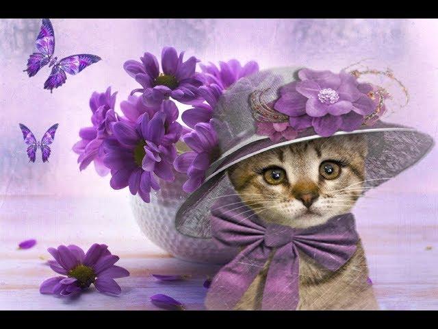 Смотреть видео Хорошего настроения - Милые кошки (муз.Бетховена)