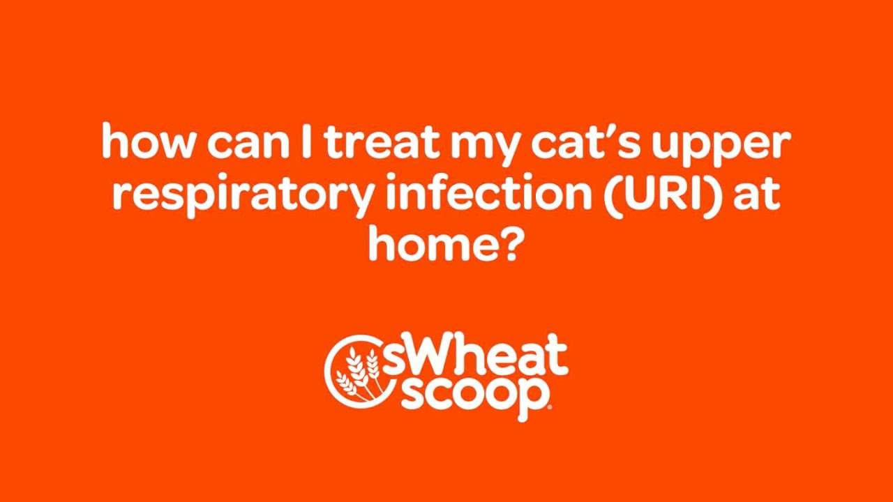 How Can I Treat My Cat S Upper Respiratory Infection Uri