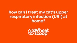 how can I treat my cat's Upper Respiratory Infection (URI) at home?