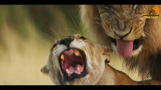 Wild Fauna / Sex в дикой природе / Битва полов