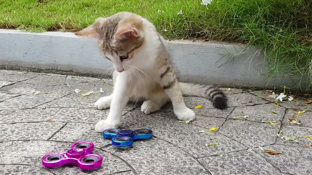CUTE CATS PLAY WITH TOYS FOR KIDS