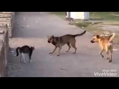 Lè Chen Fè Tròp Stil. Pa Bliye Abònew Epi Like Video A