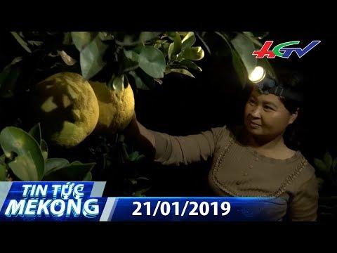 Nhà vườn miền Tây phấn khởi đón Tết | TIN TỨC MEKONG – 21/01/2019