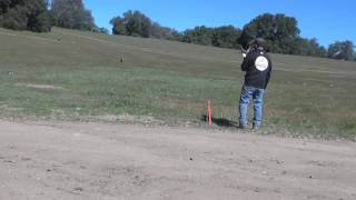 Dog Training - Multiple Uses For Tie Out Stake