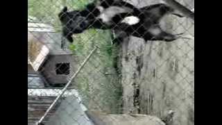 Śmieszny pies. Temu psu niepotrzebna trampolina : )