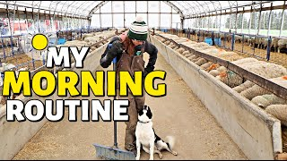 My Typical Morning on the Sheep Farm.  (I HAVE TWO JOBS??)  Vlog 286