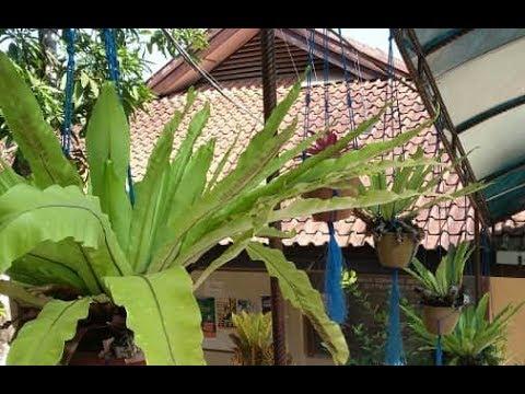 Tanaman Hias Gantung Ide Desain Taman Cantik Outdoor Garden