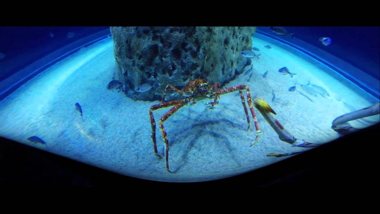 Malta National Aquarium by paul ayling - YouTube