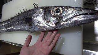 【過去最高希少種】10年に1度の幻の魚がきまぐれクックに届いた