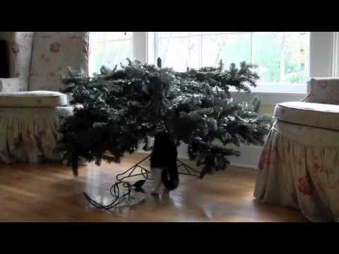 Can Cats and Christmas Trees Co-exist? from Purina Cat Chow