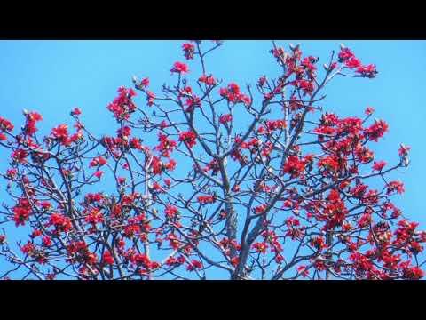 Spiritual Evolution, Spiritual Revolution | Ajahn Achalo