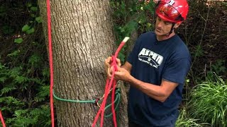 Video How to Rig a Tree for Ascending download MP3, 3GP, MP4, WEBM, AVI, FLV Desember 2017
