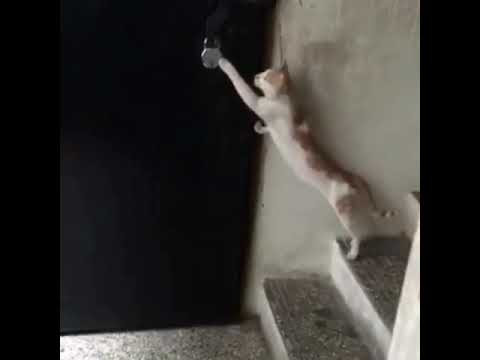 Cat knocking door funny clip 2018