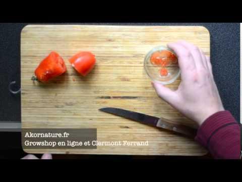 comment r cup rer les graines de tomates youtube. Black Bedroom Furniture Sets. Home Design Ideas