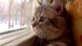 Кот в депрессии.Прикол