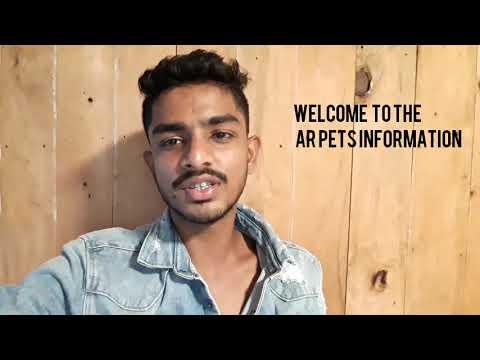 great dane dog information in hindi