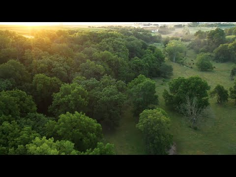 Premiere Hunting Farm For Sale In Allamakee County, IA (52 Acres)