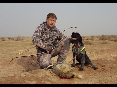 Охота на барсука - Охотничий портал