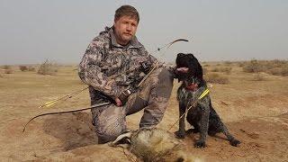 """Цикл """"Таджикистан охотничий 3 серия"""" Охота на зайца и барсука в Таджикистане с луком и стрелами."""