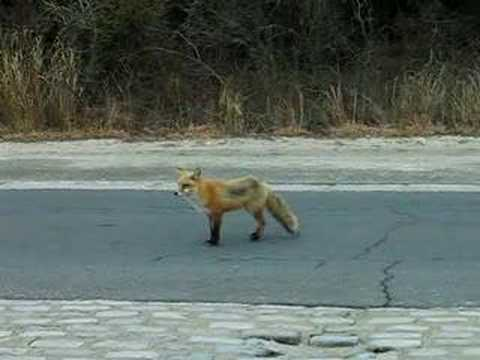 Red fox island beach state park nj 3 youtube for Ibsp fishing report