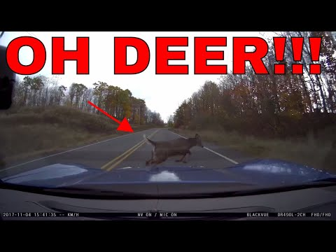 Deer Strike In A C7 Corvette - Dashcam, Damage, Costs