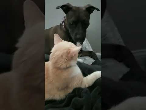 Liz - Watch this dogs hilarious reaction to the cat swiping at him!