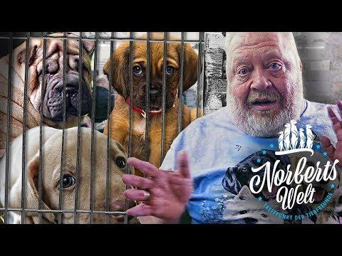 HUNDEVERKAUF Im ZOOLADEN? | WIESO Geht Das? | NORBERTS WELT | Zoo Zajac