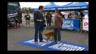 """Bernie Yeszin Wins  Animal Planet """"who Let The Dogs Out"""" - Clip #1"""