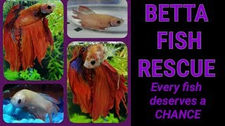 BETTA FISH RESCUE Every fish deserves a CHANCE