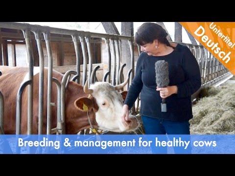 Improving health of organic dairy cows through breeding and management OrganicDairyHealth