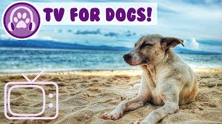 18th Feb Dog TV