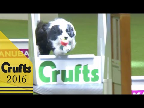 Flyball - Team Quarter Finals | Crufts 2016