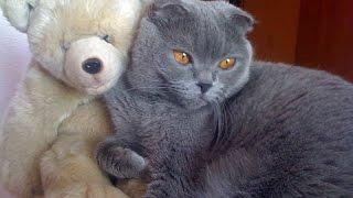 Кот опять гоняет медведя)