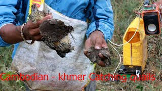 How to Find quail - Cambodian - khm...
